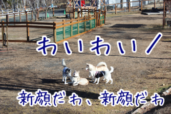 IMG_6047.png
