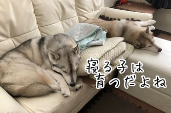 IMG_5439.jpg